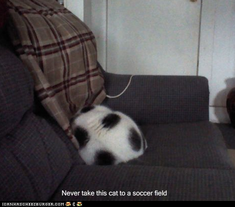 funny-pictures-never-take-this-cat-to-a-